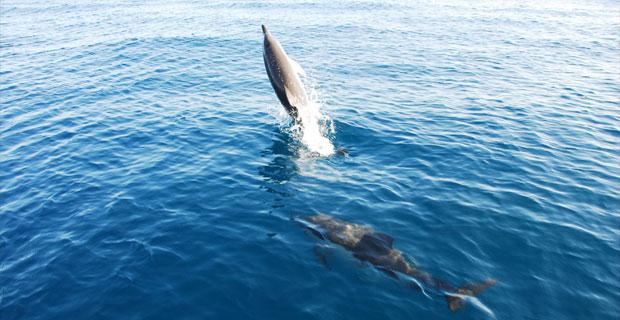 Delfines en Estepona